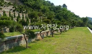 양평서종수목장