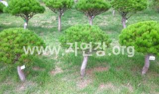 김포월곶수목장