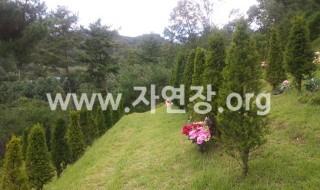 춘천홍천수목장